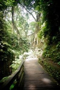 Monkey Forest, Ubud